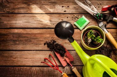 Gardening tools, watering can, seeds, plants and soil