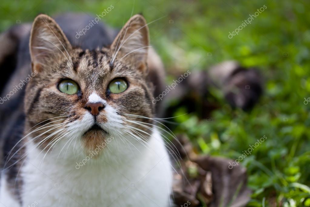 stray cat outdoor