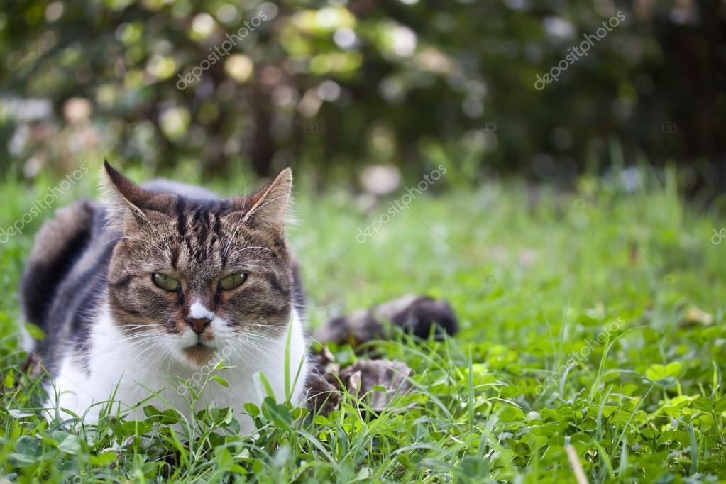 stray cat outdoo