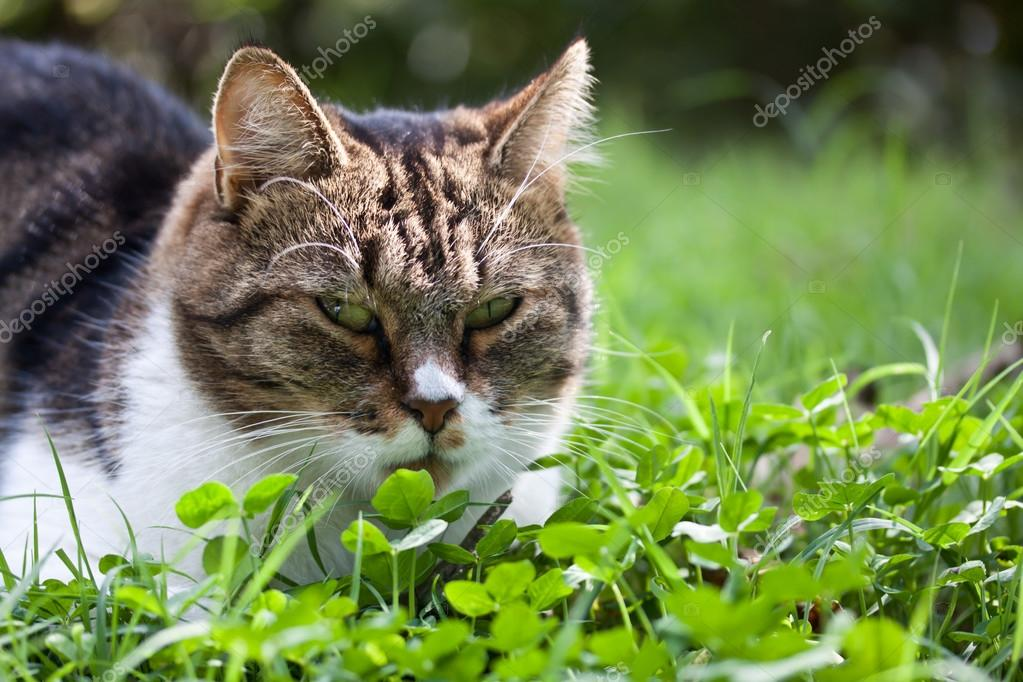 cat outdoor in nature