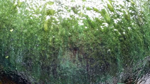 Obří sklenici fontána zelené řasy povrch detail
