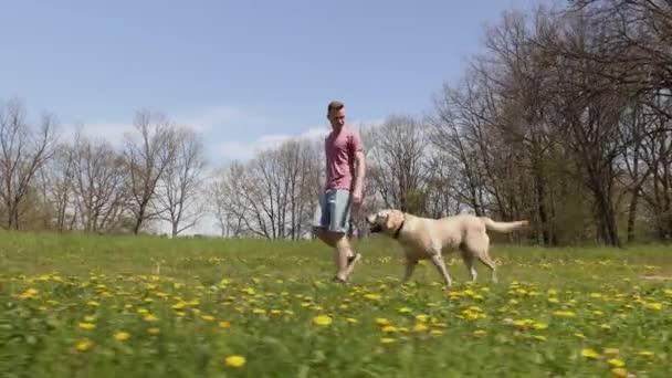 Vidám fiatalember a kutyájával a természetben. Labrador retriever fut tavaszi réten a napsütéses napon.
