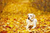 Dog in autumn