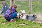 Fotografia bambini alimentazione conigli
