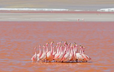 Dancing flamingos in pink water