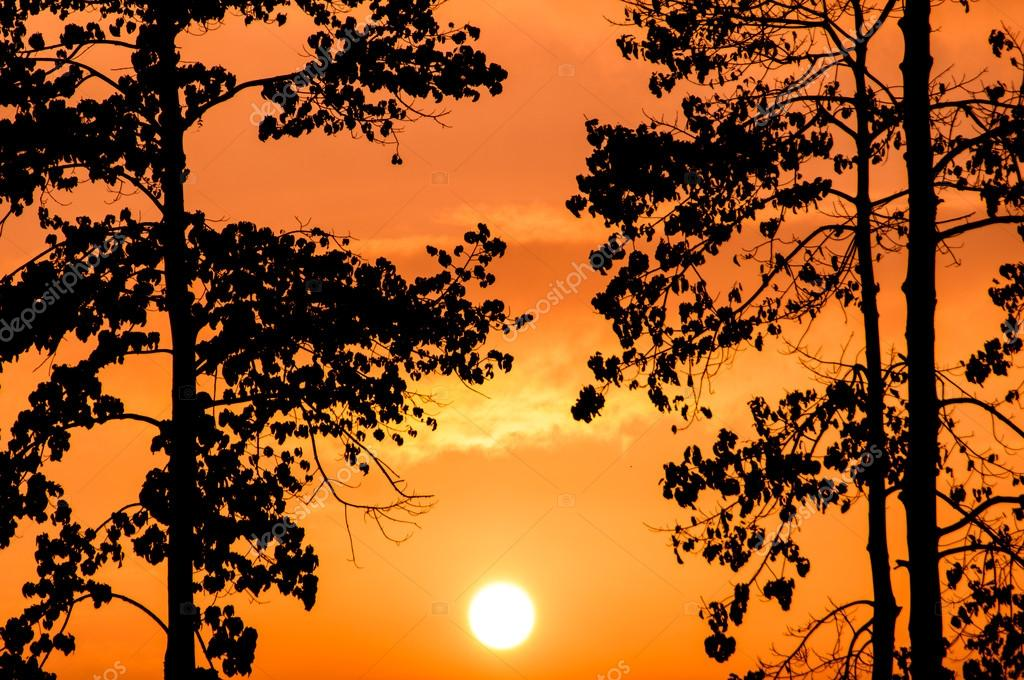 trees with picturesque orange sunset