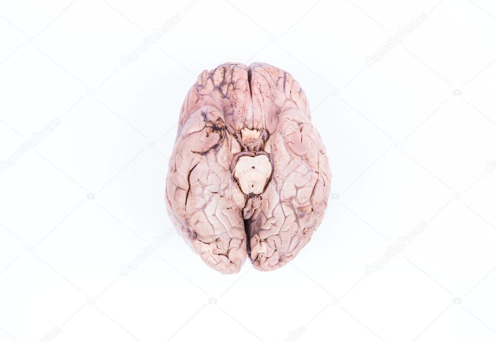 menschliche Gehirn isoliert auf weiss — Stockfoto © giorgiomtb #59741489
