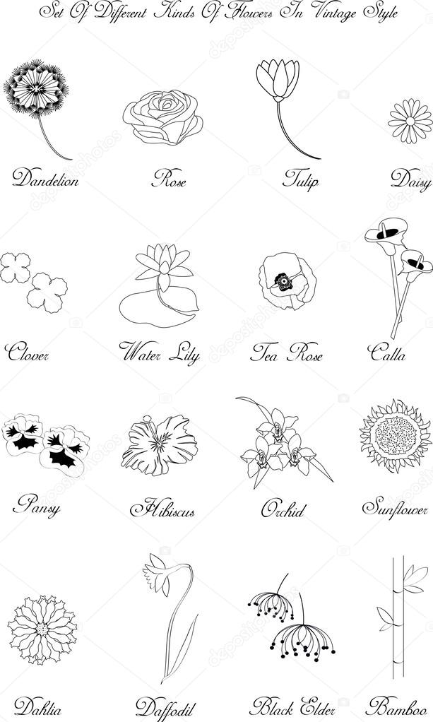 Different Kinds Of Flowers Stock Vector Pizla09 52579935