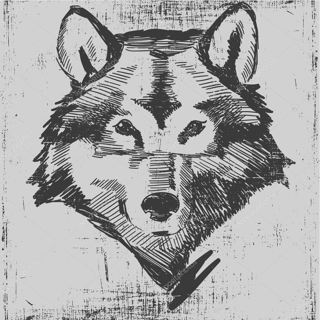 Wolf head hand drawn sketch grunge texture engraving style