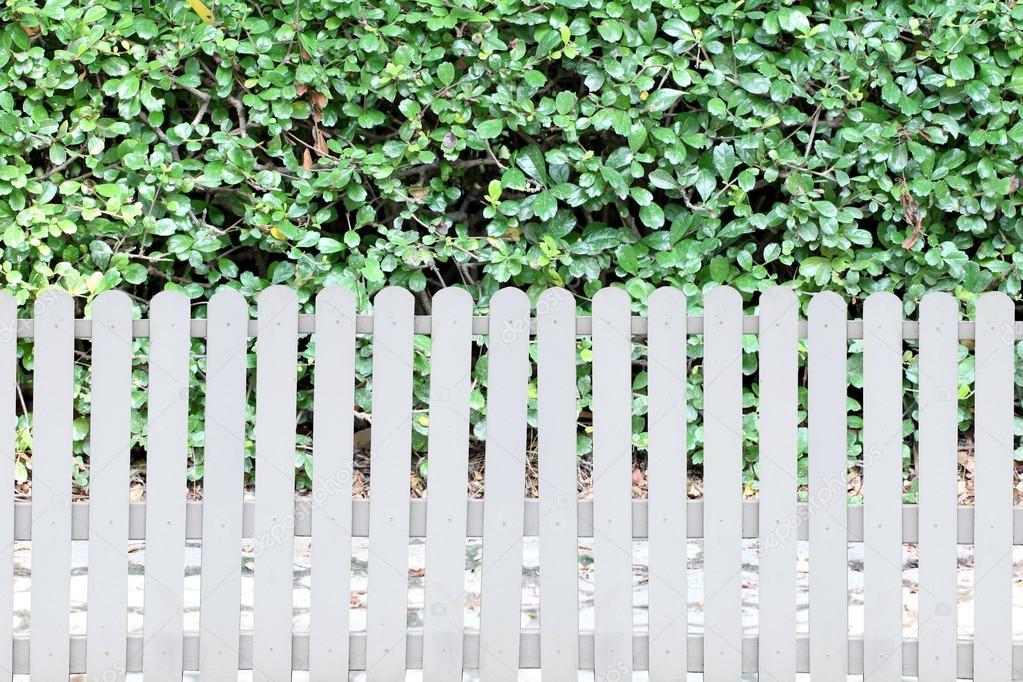 Weisser Zaun Und Grune Blatter Im Garten Stockfoto C Meepoohyaphoto