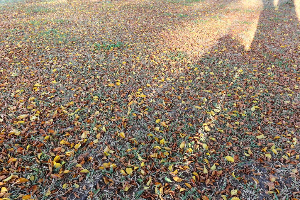 A ray of sunlight on the autumn leaves on the lawn.