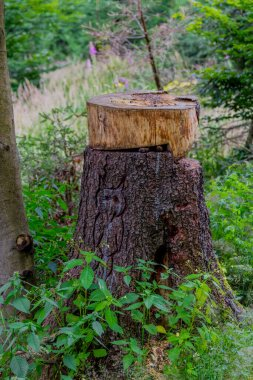 Summer Walk through the beautiful nature of Thuringia