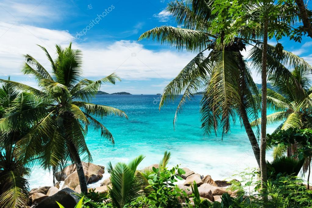 Palms on tropical beach on Seychelles