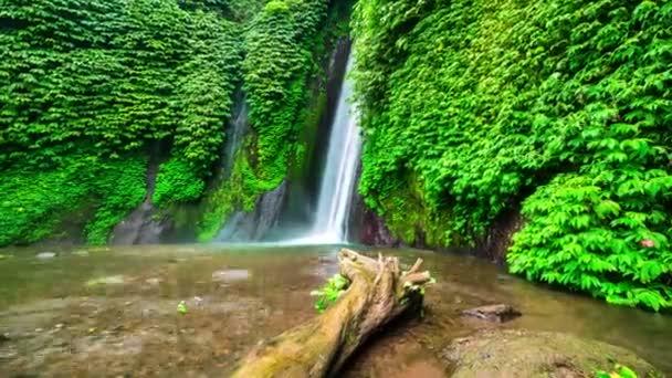 Starý strom poblíž Munduk vodopád