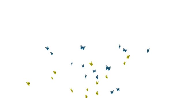 Butterflies on black and white background