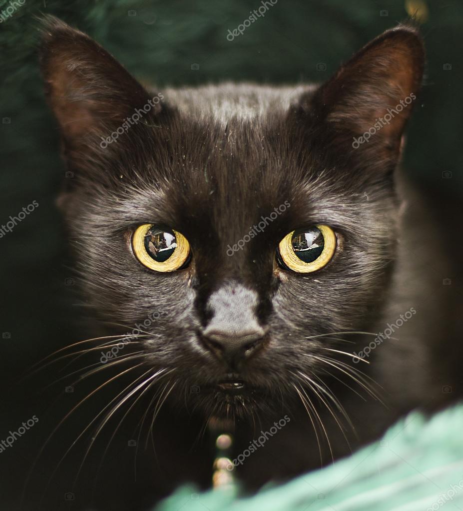 eben MILF kočička obrázky