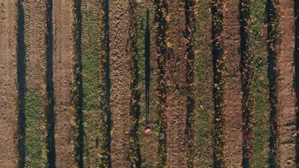 Muž v červeném tričku kráčí po polní cestě