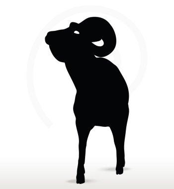 big horn sheep  silhouette in face upward  pose