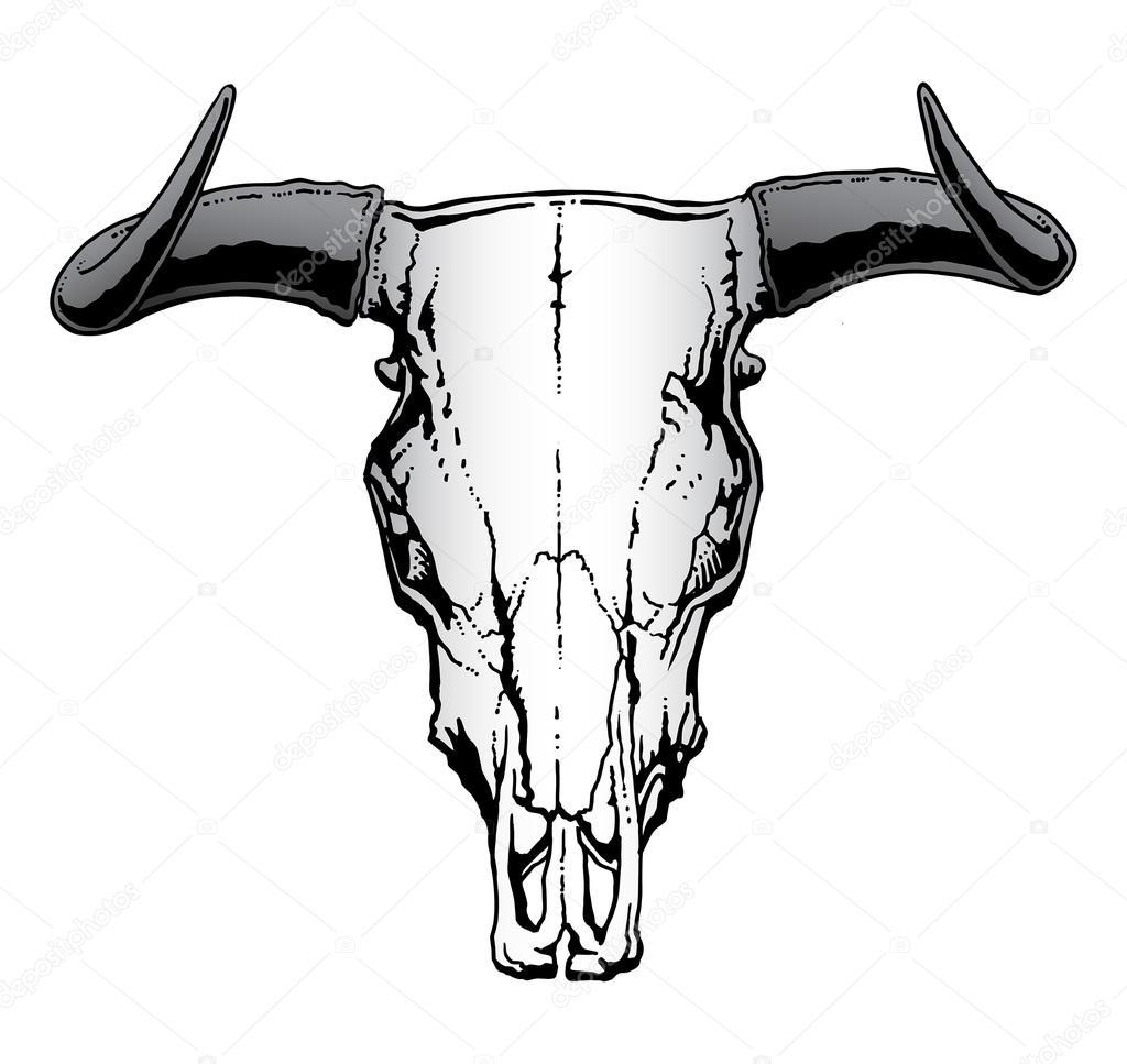 Western Bull or Steer Skull