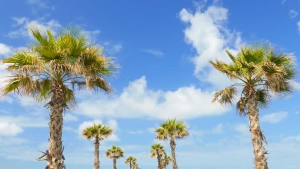 Větví kokosových palem pod modrou oblohou, timelapse