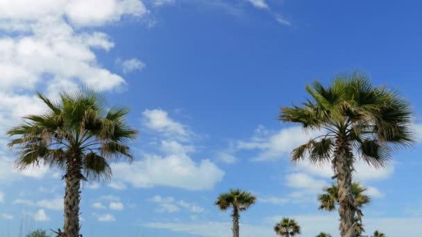 Palmy na tropické pobřeží a mraky