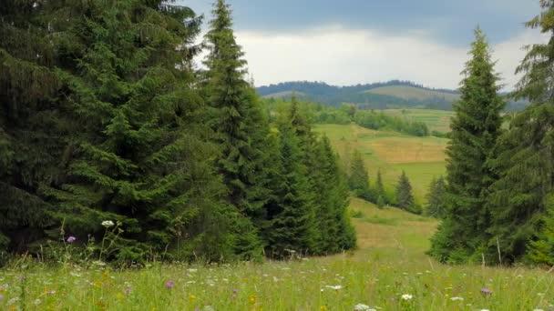 Beautiful landscape, flower meadow, conifers