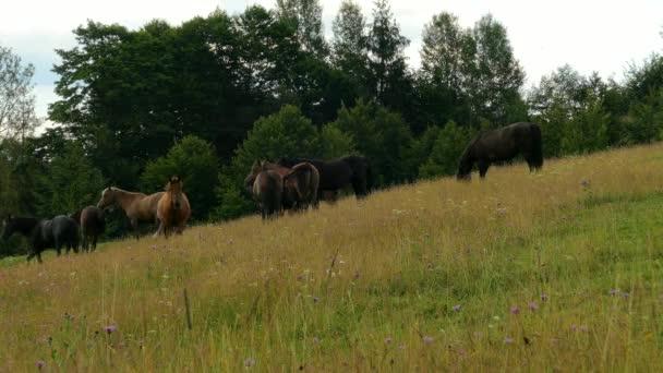 Pferde Weiden auf der Alm