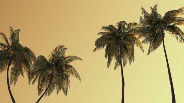 Palm Beach a moře