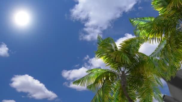 Cestování letadlem na moře, palmy
