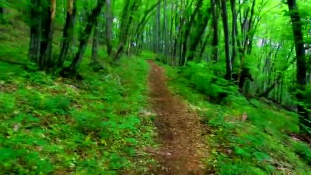Procházky po zelený Les