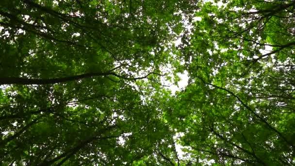 szél mozgatja ágak az erdő