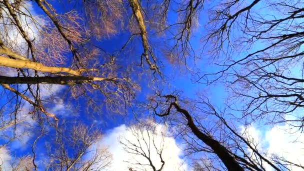 Wind moves branches in forest on blue sky