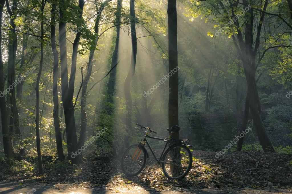 Bicycle and morning