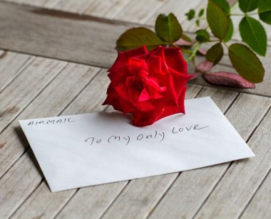 A stalk of red rose with love