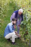 Fotografie vinař a vinařství majitel pracovní