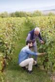 vinař a vinařství majitel pracovní