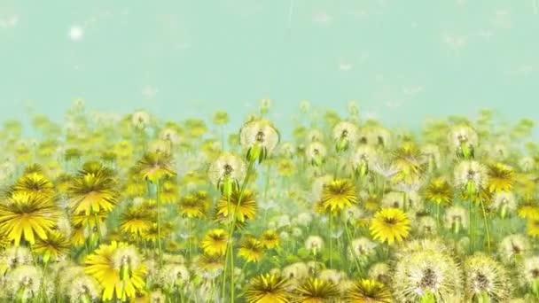 Květiny Pampelišky - 3D animace smyčka 10 sec