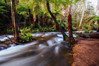 Cement Creek River Flowing in Australia