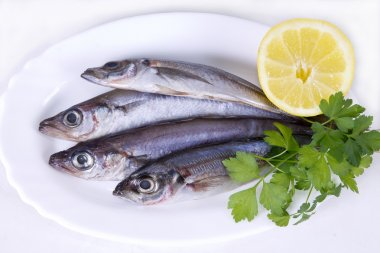 whiting and mackerel on plate