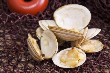 clams in fishing net