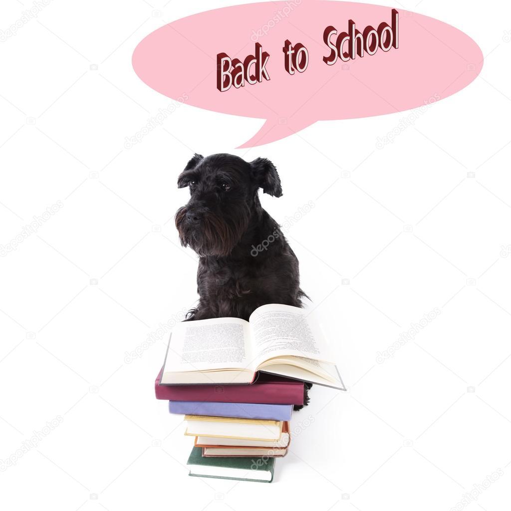 Afbeeldingsresultaat voor terug naar school hond
