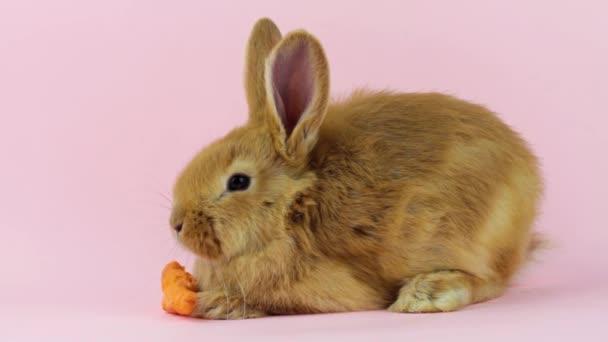 kleine rote flauschige niedliche Hase mit großen Ohren sitzt neben einer reifen orangefarbenen Karotte auf pastellbeigem Hintergrund, Nahaufnahme, Osterhase für die Osterfeiertage. Frühjahrskonzept