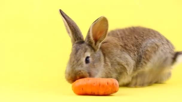 kis bolyhos barna nyúl eszik egy fiatal friss narancs sárgarépa sárga pasztell háttér