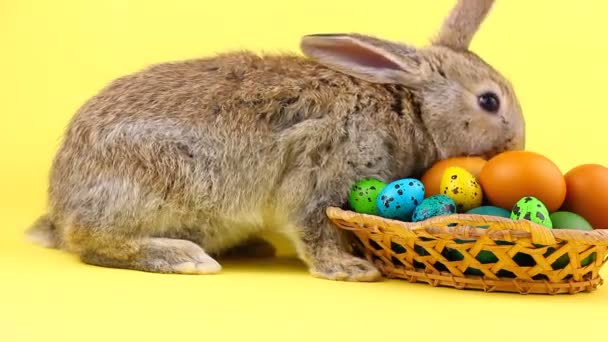 little fluffy brown affectionate domestic rabbit sitting on a pastel yellow background with a wicker wooden basket full of colorful Easter eggs