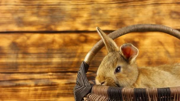 egy kicsi, gyönyörű, bolyhos barna nyúl ül egy fonott kosárban, és kinéz belőle, megmozgatja a fülét egy perzselt díszített háttér