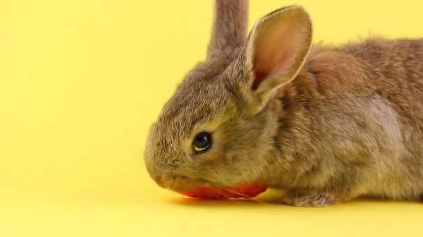 kleines flauschiges braunes Kaninchen, das eine junge frische orange Karotte auf gelbem Pastell-Hintergrund isst