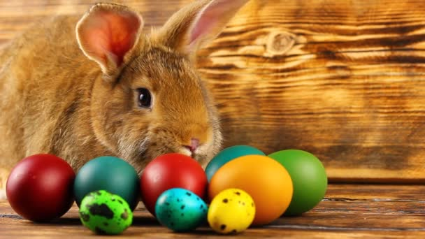 curious little fluffy brown bunny sits on a wooden background with multi-colored painted Easter eggs