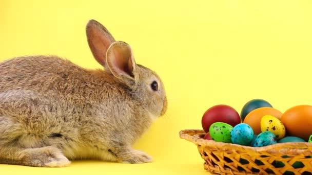 Malý hnědý chlupatý zajíček sedící na pastelově žlutém pozadí s dřevěným košíkem plným ozdobných velikonočních vajíček, zblízka. Velikonoční zajíček. Koncept jarních prázdnin