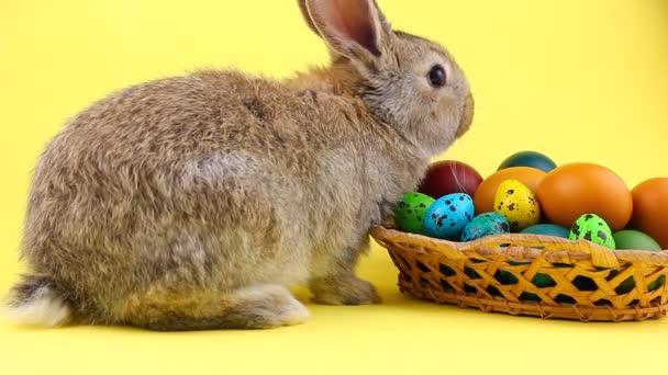 malý načechraný hnědý láskyplný domácí králík sedící na pastelově žlutém pozadí s proutěným dřevěným košem plným barevných velikonočních vajec