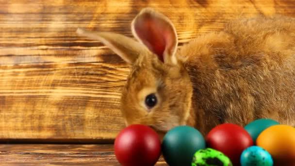 kíváncsi kis bolyhos barna nyuszi ül egy fa háttér többszínű festett húsvéti tojás